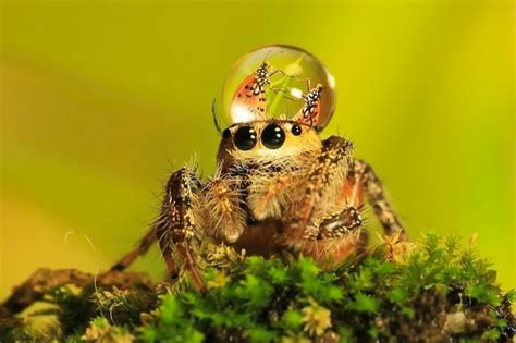 check   crazy macro   spiders wearing