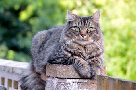 cat or 9 cat breeds that water adventure cats