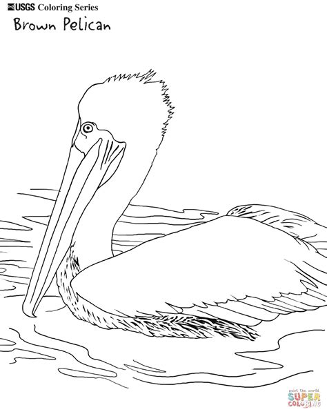 Pelican Coloring Pages brown pelican coloring page free printable coloring pages