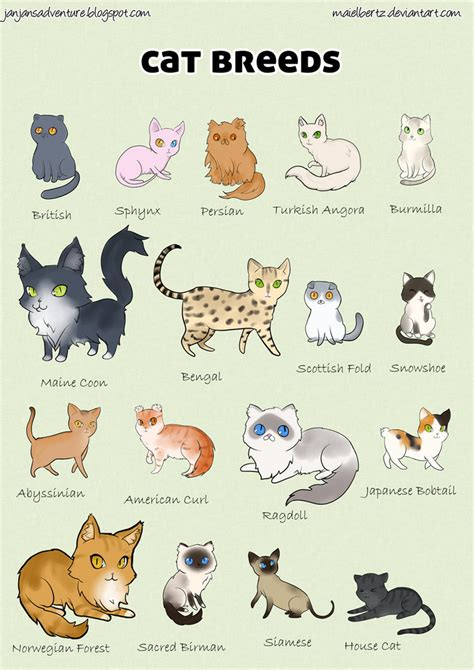 breeds with cats cat breed poster by maielbertz on deviantart