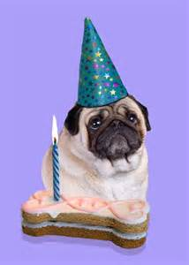 pug birthday card pugs