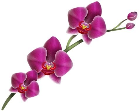 Jw Wallpaper Sticker Gold Flowers purple orchid clipart png image gallery yopriceville