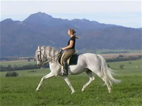 trotto seduto el caballo de trote y galope rincon privado