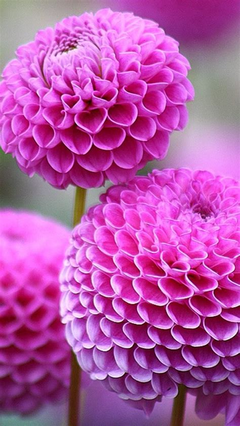 awesome looking flowers cool looking flowers my soul pinterest
