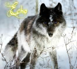 wolf colors shadow daybreak wolf rp members