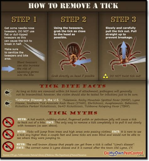 how to remove a tick from infographics how to remove a tick primalkb survival skills for a primal world