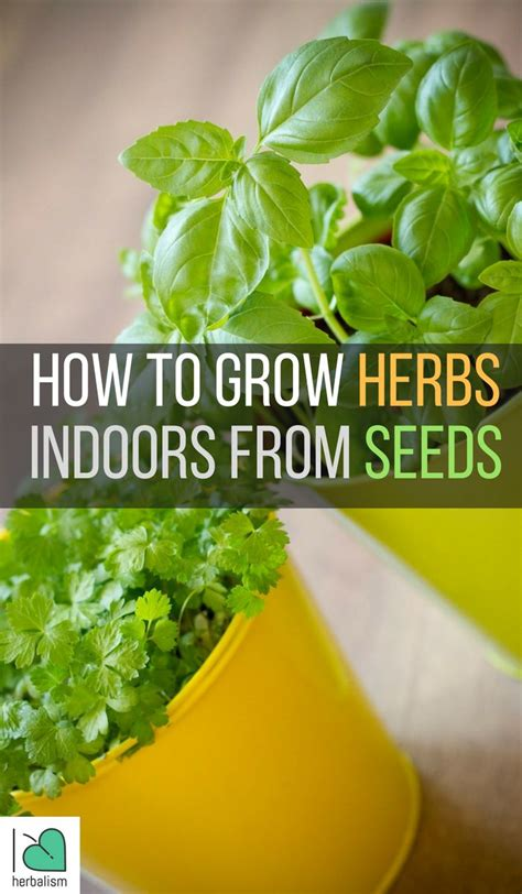 Growing Herbs Indoors From Seeds | 1000 images about healing with herbal medicine on