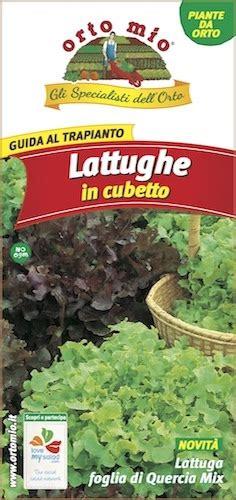 coltivare lattuga in vaso coltivare lattuga insalata