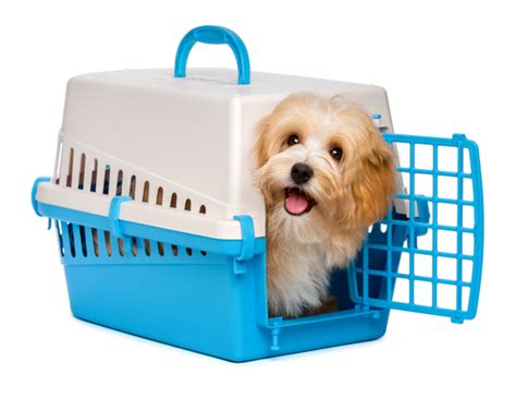 havanese crate crate a puppy all about bichon frises