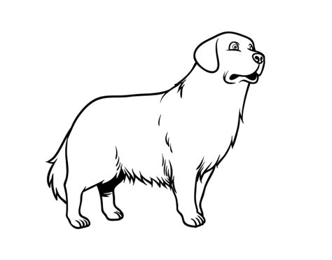 Golden Retriever Coloring Pages by Golden Retriever Coloring Page Coloringcrew