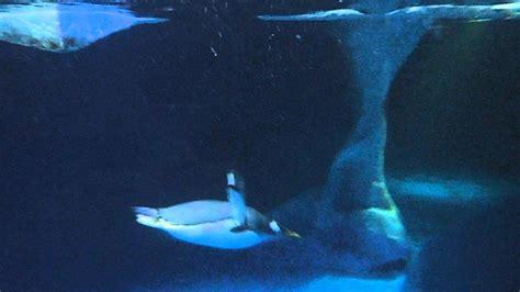 Im Wasser by Pinguine Im Wasser
