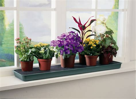 Window Sill Garden Planters Window Sill Planter And Where To Get Affordable Ones