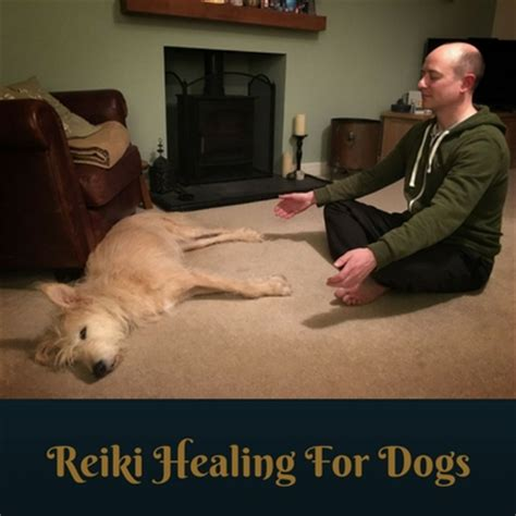 healing dogs reiki healing for dogs caring for a senior