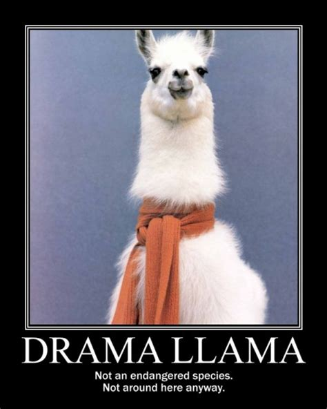 Drama Llama Meme - tales from an upstate girl march 2011