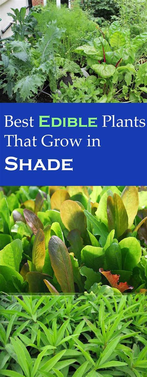 edible plants in your backyard best 25 patio herb gardens ideas only on pinterest