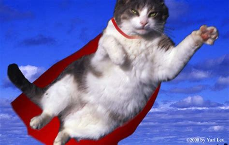 Supercat Kitten 800gr cat