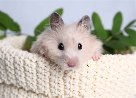 7 Tips On Taking Care Of Hamsters by 7 Tips For Taking Care Of Your Hamster