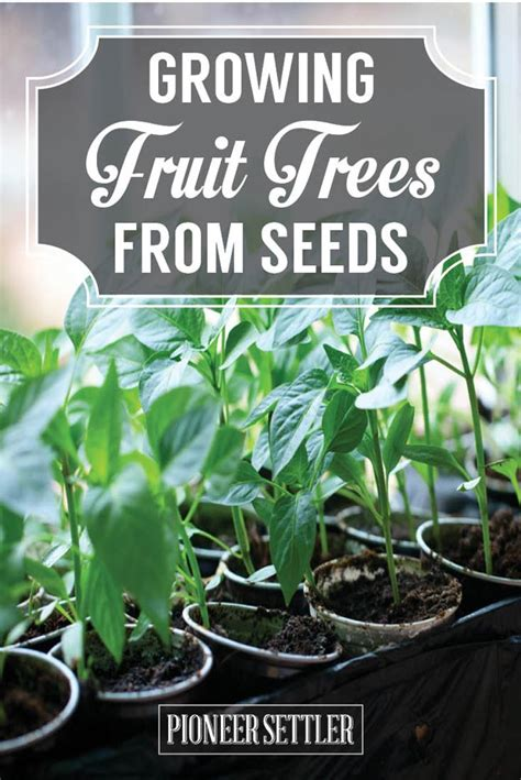 fruit tree growing growing fruit trees from seeds you save homesteading