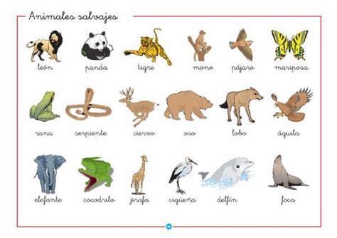 fotos animales silvestres animales silvestres y domesticos imagui