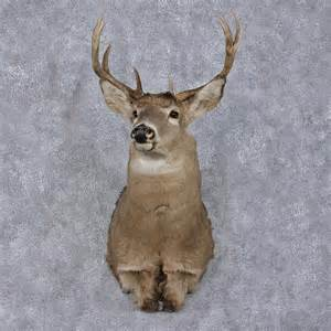 Whitetail deer taxidermy mount eye photo picture pictures
