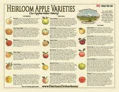 Apple Tree In Backyard Variety Id Apples On Pinterest Apples Oldenburg And