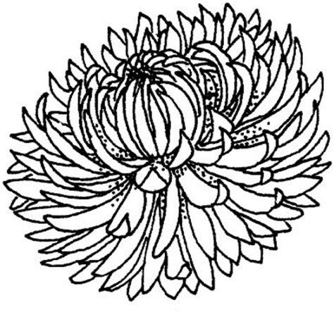 mums colouring book of 1530725488 chrysanthemum 4 coloring flowers coloring coloring pages and coloring books