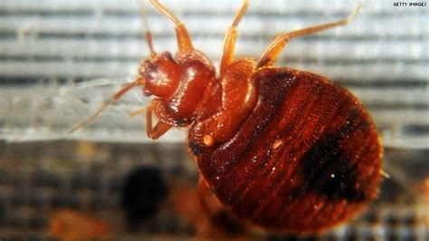 Do Bed Bugs Die With by Pop A Pill To Battle Bed Bugs Hlntv