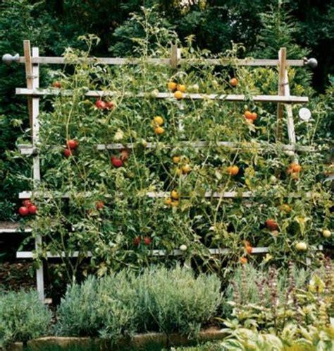 Tomato Trellis Gardens Vegetable Gardens Pinterest Vegetable Garden Trellises