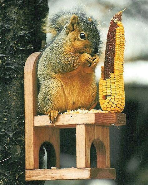 Squirrel Feeder Chair by Squirrel Chair Feeder Quality Handcrafted Cedar Squirrel