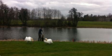 Golf Mba by Luttrellstown Golf Course Smurfit Mba