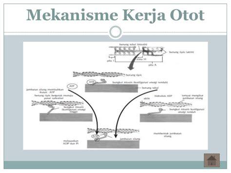 mekanisme kerja induktor dan kapasitor sistem gerak otot