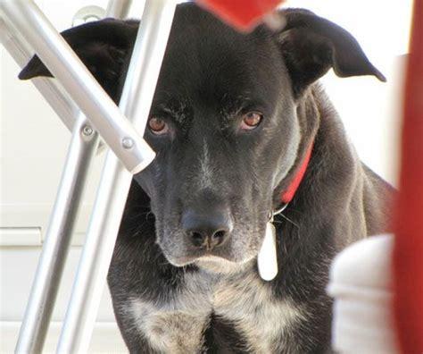 portare al canile cucciolissimi org cucciolissimi nerone e adozioni