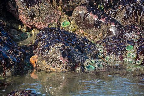 summer tide pools on oregon coast are different and there