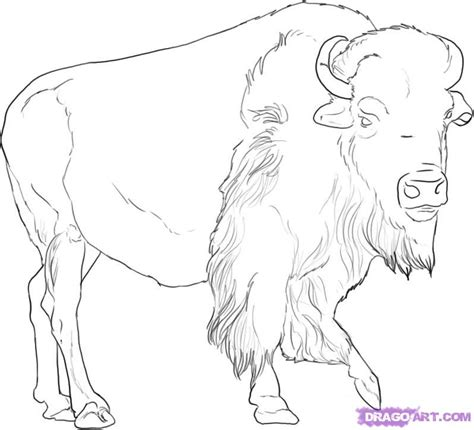 printable animal line drawings how to draw a buffalo step by step great plain animals