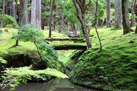 the most beautiful parks in kyoto japan