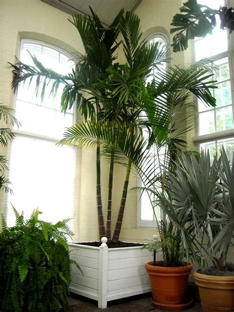Indoor Palm | indoor palms indoor plants ferns pinterest