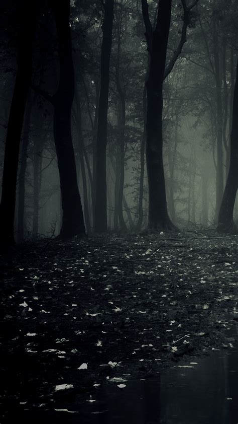 Dark Forest HD Wallpaper For Your Huawei Honor 8 Smartphone