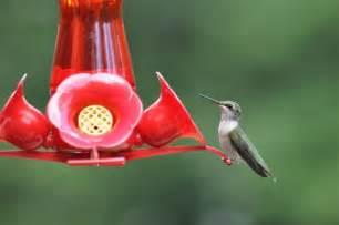 hummingbird food garden pinterest