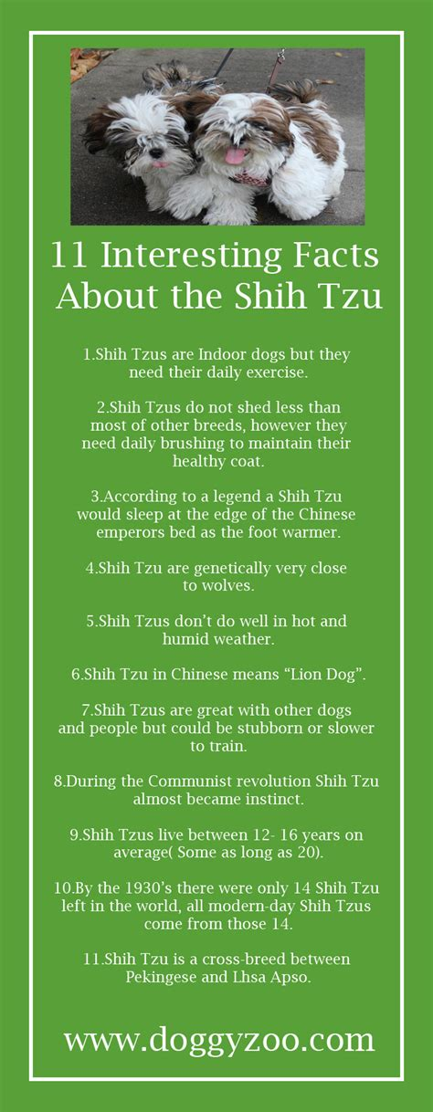 facts about shih tzu 11 interesting facts about the shih tzu doggyzoo comdoggyzoo
