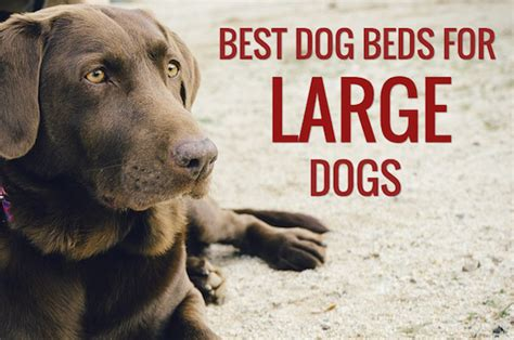 best beds for large dogs 8 best beds for large dogs bed reviews