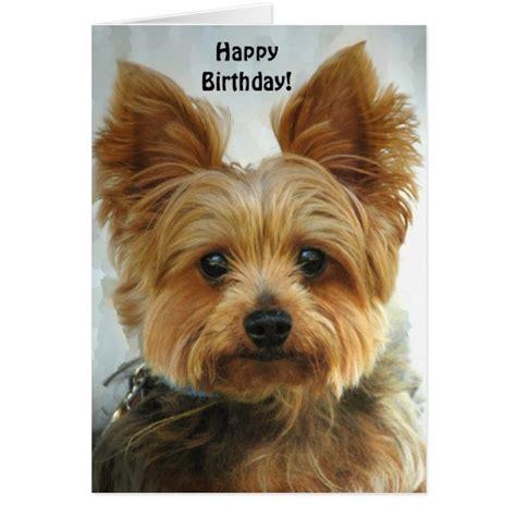 happy birthday yorkie images happy birthday cake birthday cake birthday quotes birthday quotes