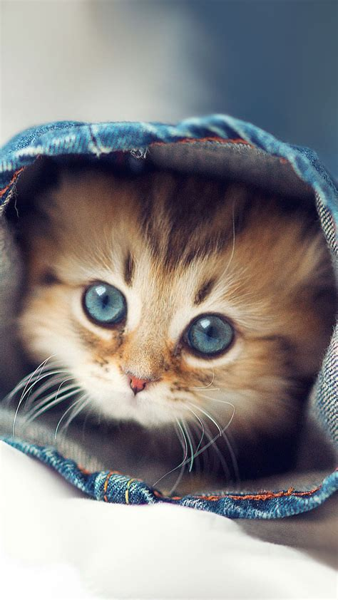 cute kittens wallpapers  iphone  hd animal wallpaper