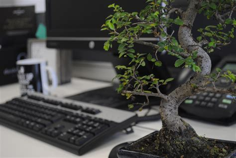 Zen Computer Desk Add A Bonsai To Your Office Interior Design