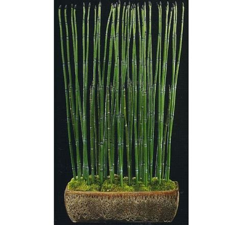 Lucky Bamboo Vases by Bamboo Worktops Photos Lucky Bamboo Pots And Vases