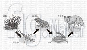 Animal food chain land jpg