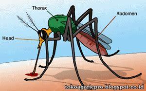 Toko Agaricpro makanan yang tepat untuk penderita malaria toko agaricpro