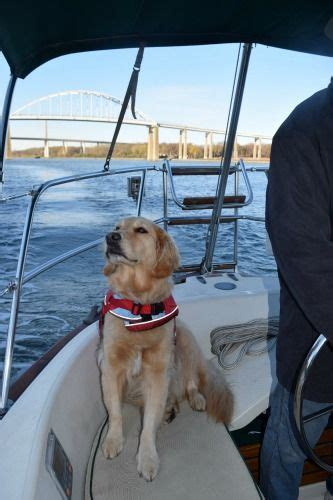 catamaran hotel dog friendly honey the golden retriever sniffs out adventures on the