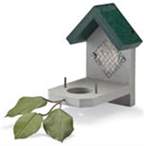 invite hummers to nest in your yard