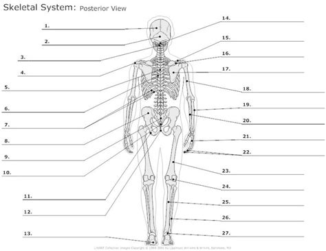 anatomy coloring book skeletal system human anatomy diagram find your human anatomy worksheets