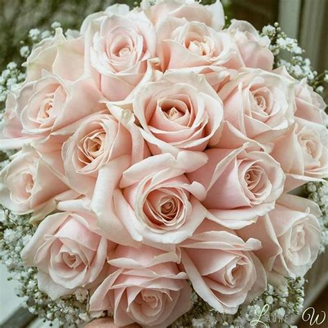 blush colored flowers blush pink wedding flowers search blush pink